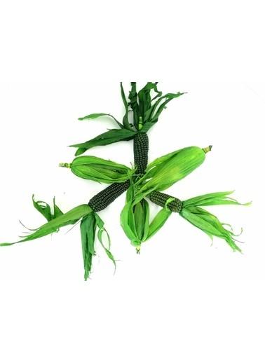 Kuru Çiçek Deposu Süs Mini Mısır Yeşil Kuru Çiçek Demeti Yeşil